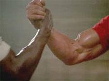 Training Partners gain muscle mass