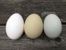 colour calories in an egg