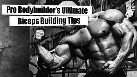 bodybuilding biceps tips