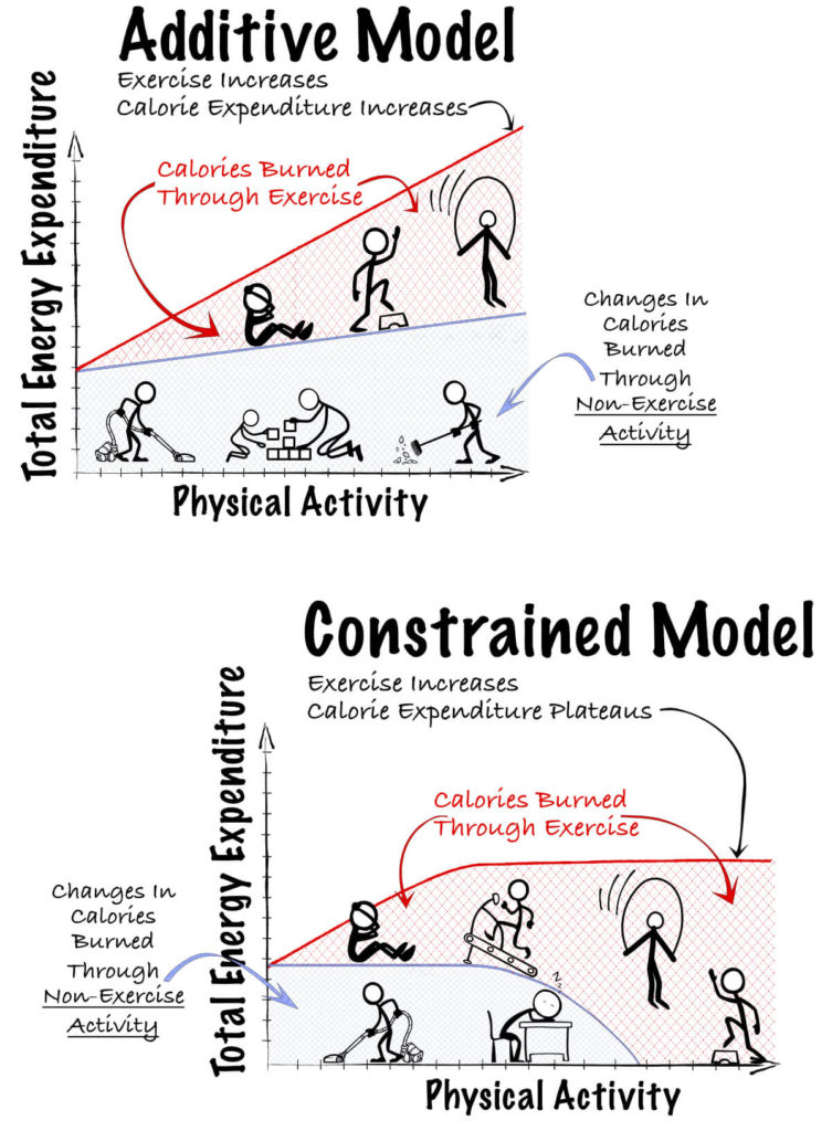 constrained model of Exercise and energy expenditure